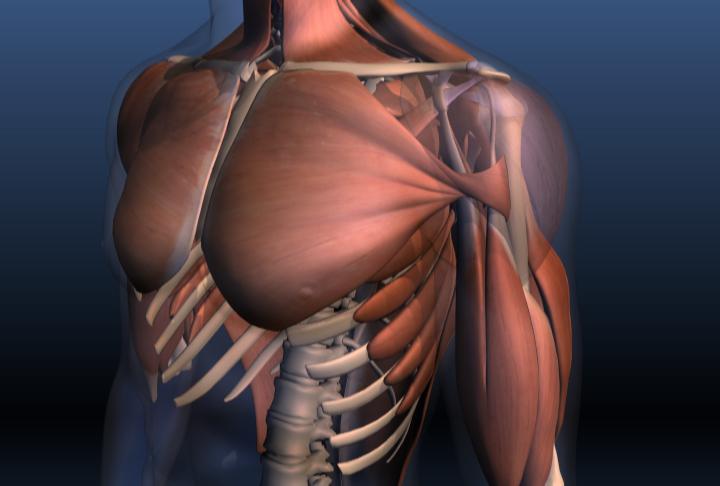 Как сделать мышцы наполненными